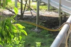 snake-kakadu