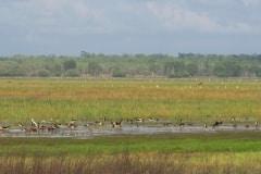 wetlands-kakadu
