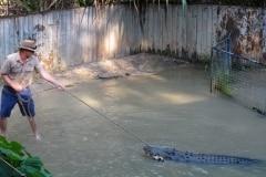 croc-attack-artleys-crocodile-adventures