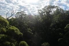 tree-top-walk-pemberton