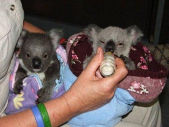 koala-stories_3_4
