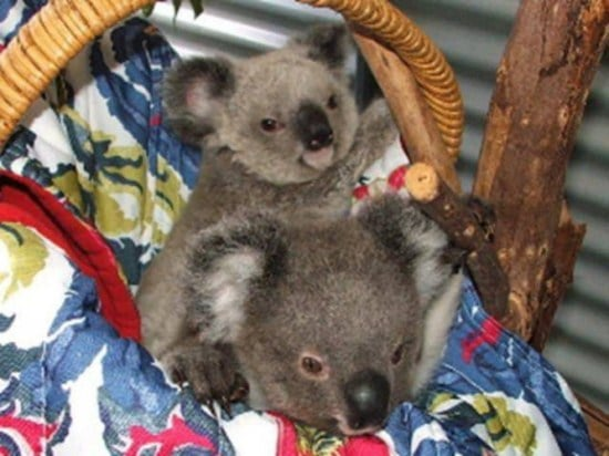 koala-stories_3_6