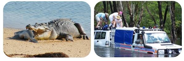 Krokodile in Australien_3