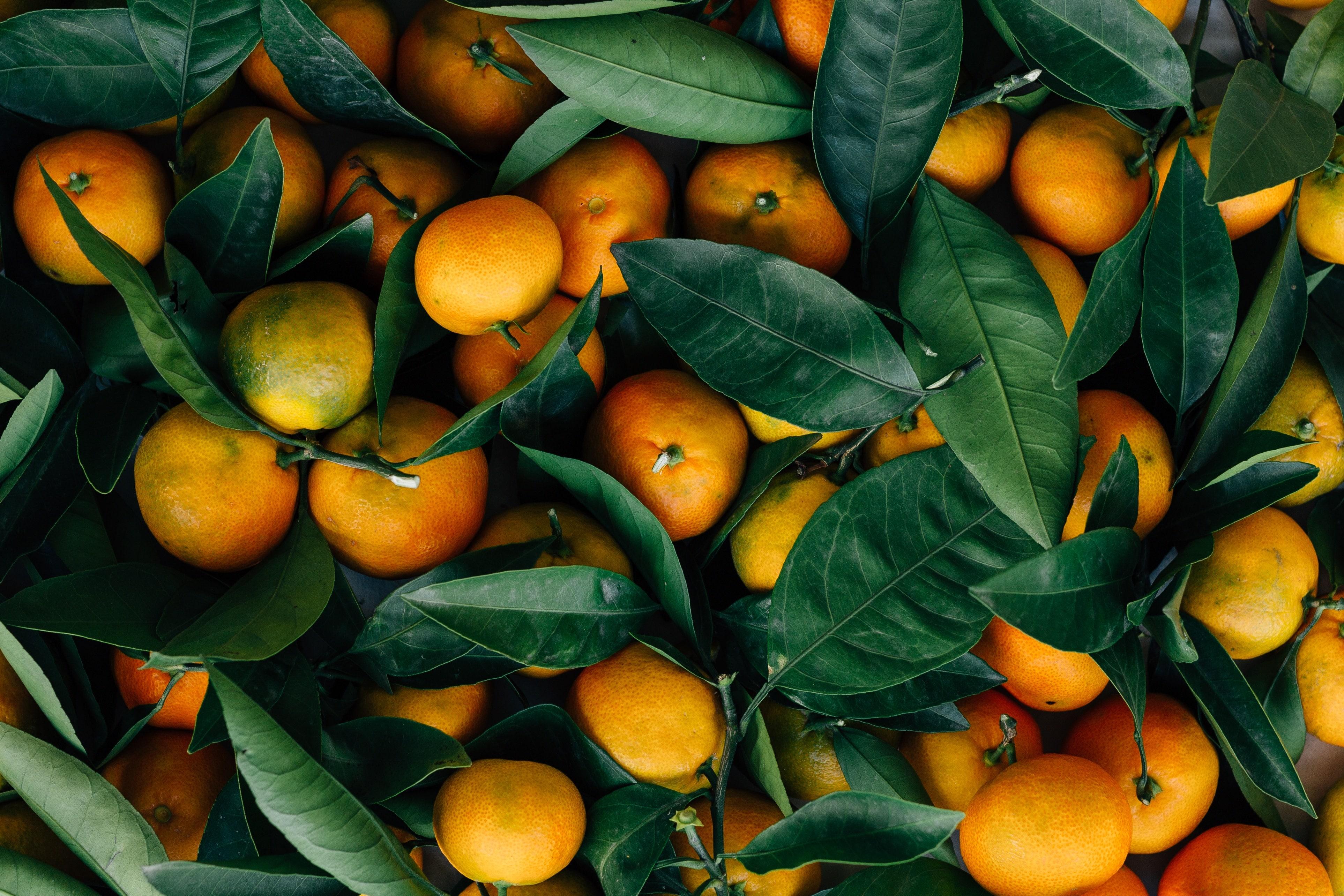 Farmarbeit in Australien Orangen