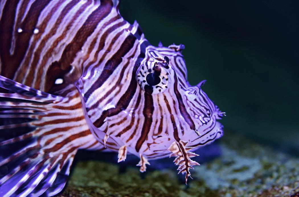 Great Barrier Reef Tour Fisch