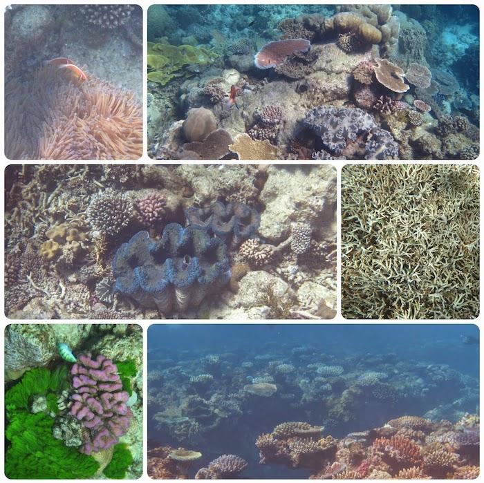 Cairns Ausflüge reef