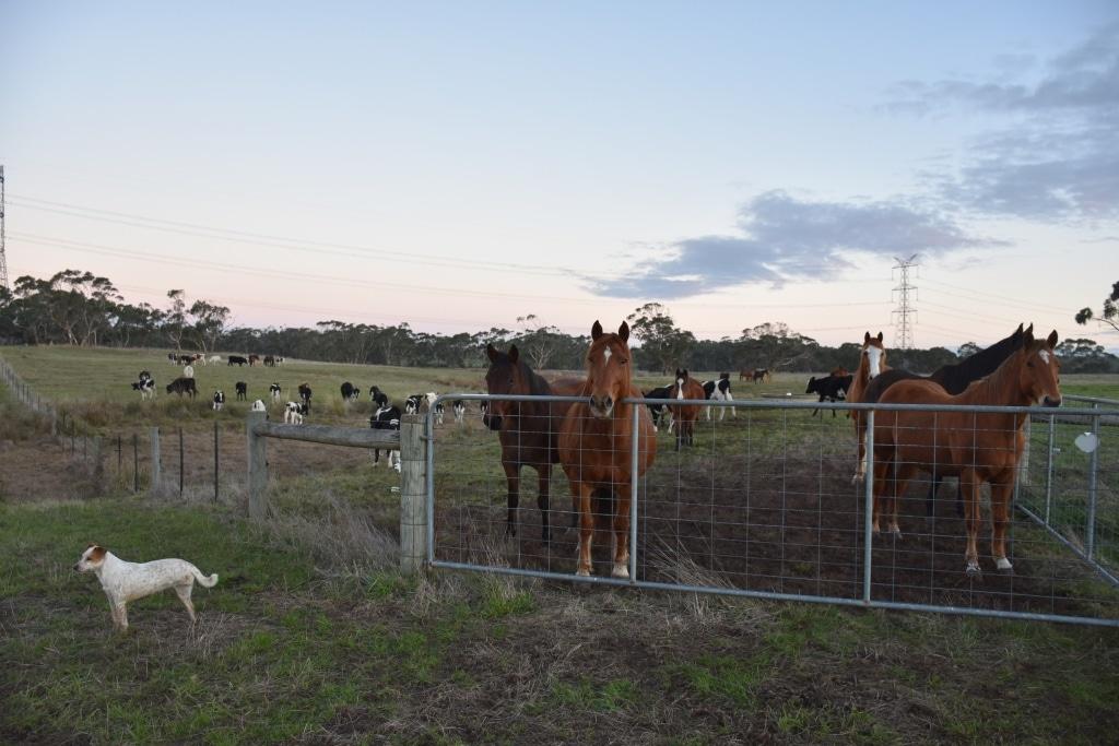 arbeiten Reitfarm Australien
