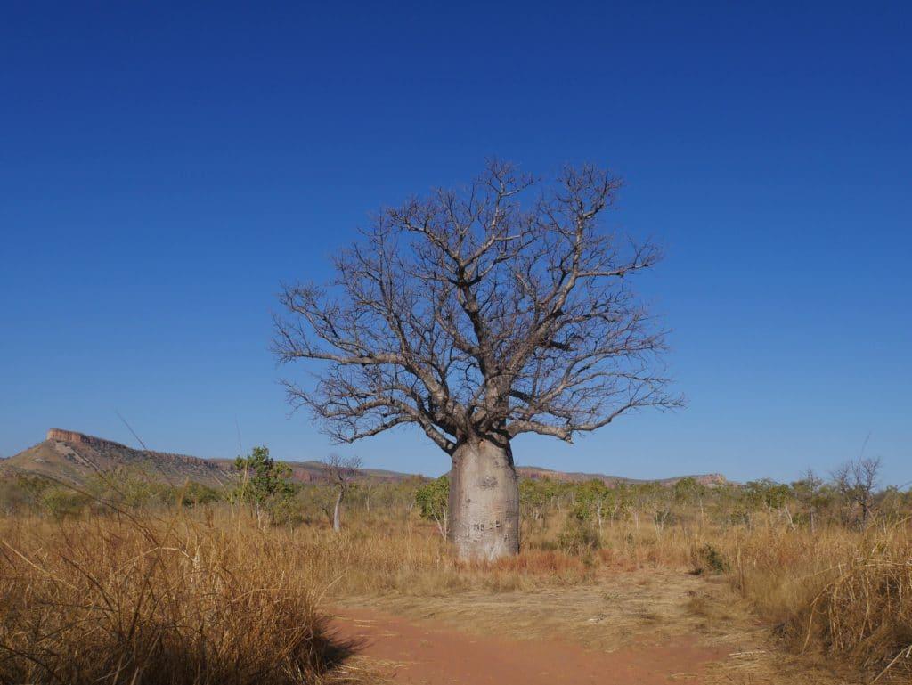 westkueste-australien Kimberley