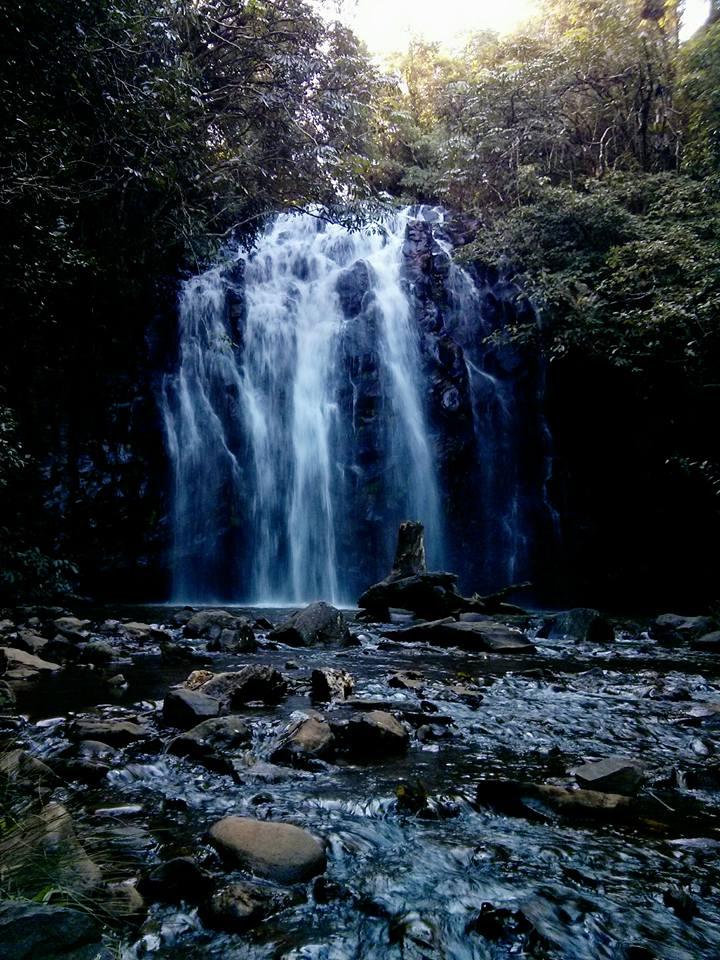 Millaa-Millaa-Falls 1